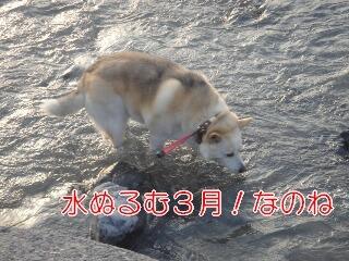 20322sakura_11