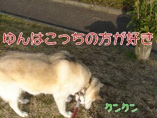 20322sakura_9