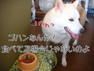 20815_004