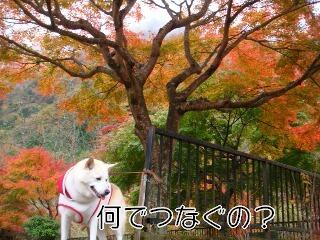 201116_046_2
