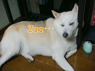 21120_1