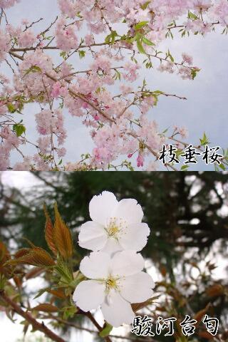 Omatomego214128