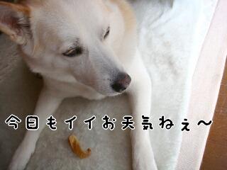 21526_010