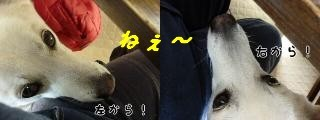 Omatomego221151