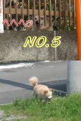 Omatomego6234