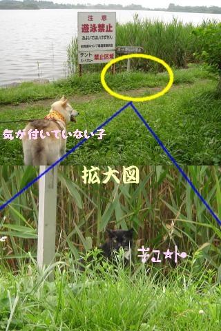 Tanukiko2