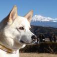 富士山 ①