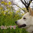 河津桜を観に♡