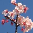 あぁ!!本当に桜だよ~