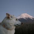 どの富士山が好き?
