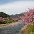 河津桜の風景