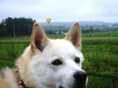 十勝・早朝の熱気球