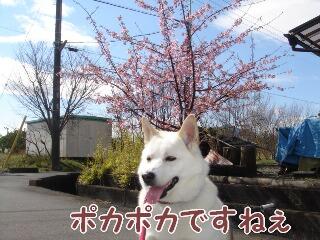 いい天気だね。