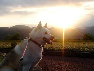 夕日が綺麗ね