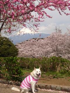 富士市岩本山公園