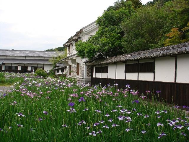 掛川加茂花菖蒲園