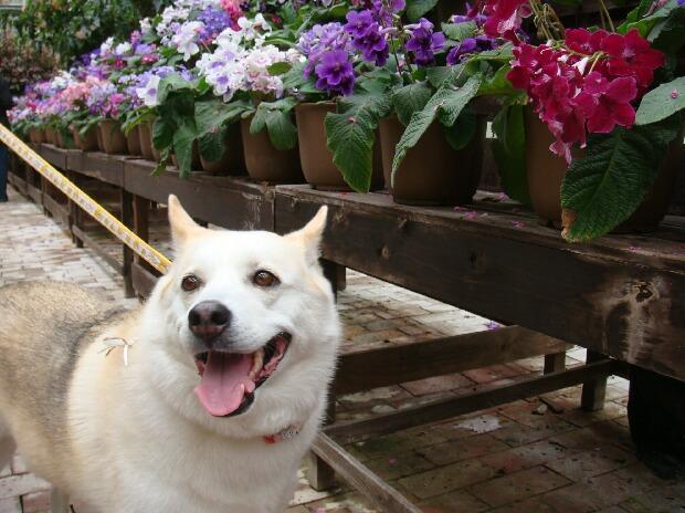 掛川花菖蒲園内の温室