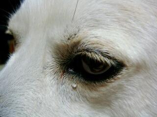 ゆんの目に涙が…