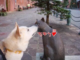 函館ネコさん