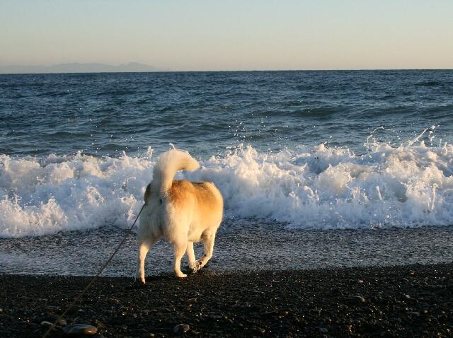 海だ~!!