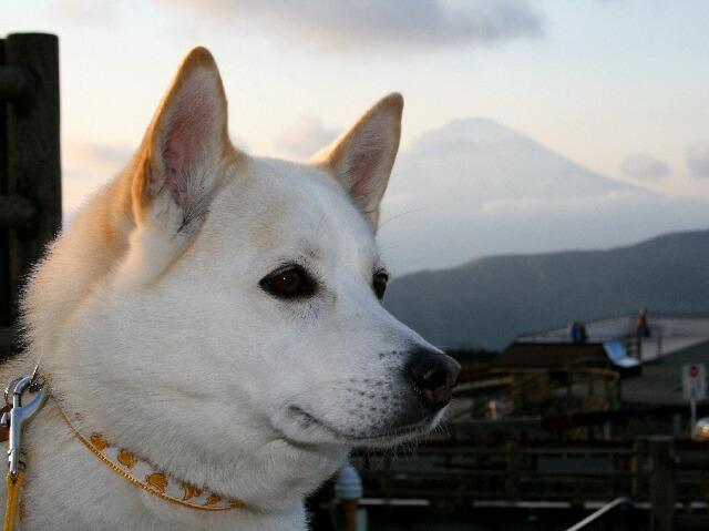 ゆんと富士山