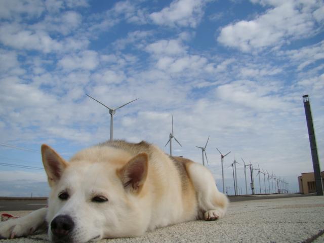 圧巻!オトンルイ風力発電所