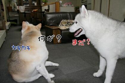 Img_0972