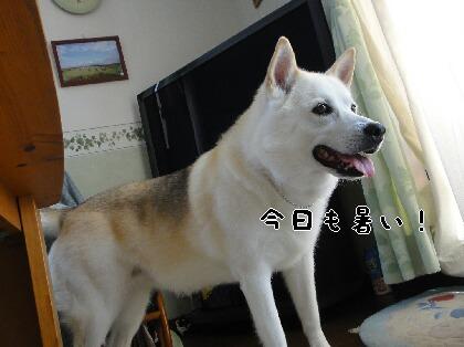 Dsc04881