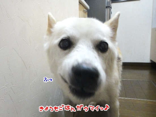 2015514_11